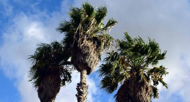 טיפים לטיפול נכון בעץ דקל בחצר